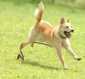 犬の夢がアナタに伝えている事!犬の夢占い!