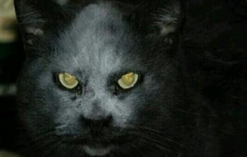 化け猫の夢