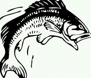 [夢占い]魚の夢とアナタの潜在意識の深い関係とは?