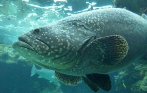 大きな魚の夢