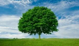[夢占い]木の夢が示す表シンボルと裏シンボルとは?