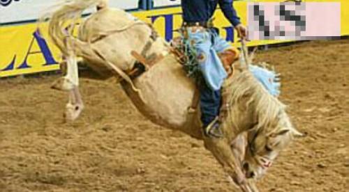 暴れ馬の夢