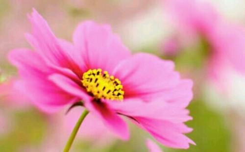 花が一輪咲く夢