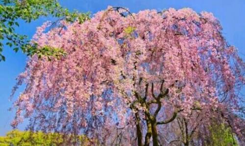 花が咲いている木の夢