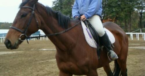 馬を乗りこなしている夢