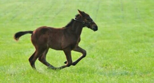 軽快に走る馬の夢
