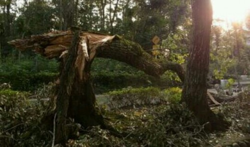 折れた木の夢