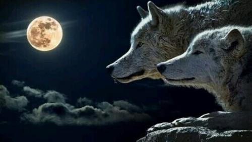 狼の夢まとめ