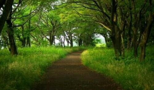舗装されていない道の夢