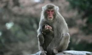 [夢占い]猿(さる)の夢が示すのは知恵?