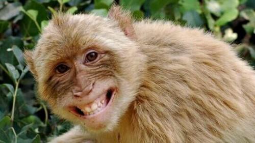 猿が笑う夢