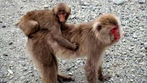 猿の夢占い