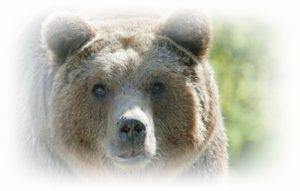 [夢占い]熊の夢でわかるアナタの心理の表と裏とは?