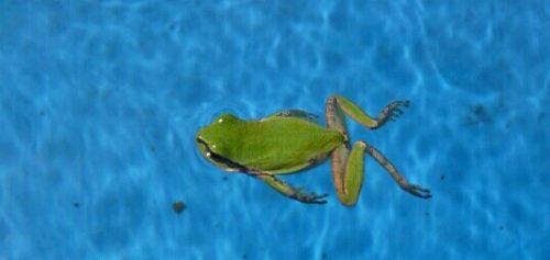 泳ぐカエルの夢
