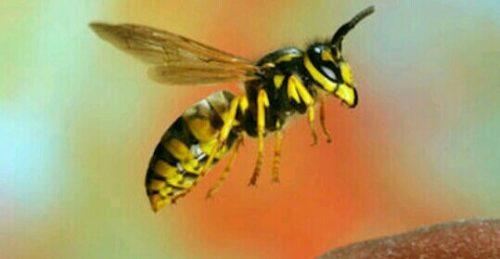 蜂の夢占い