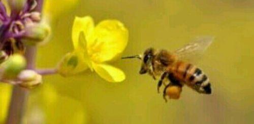 蜜蜂の蜜集め