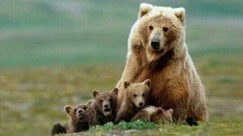 熊の親子の夢