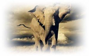 [夢占い]象の夢があらわすアナタの潜在能力とは?
