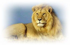 [夢占い]ライオンの夢はパワーのシンボル!アナタに伝える事とは?