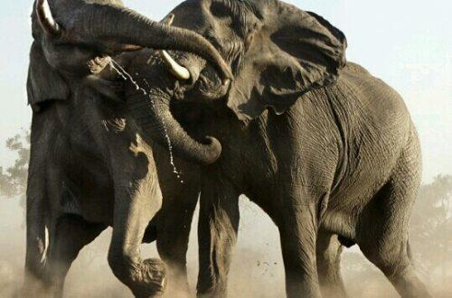 象のケンカ