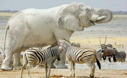 白い象の夢