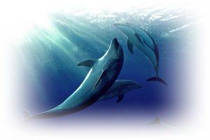 [夢占い]イルカの夢は幸運の象徴!詳しく解説!