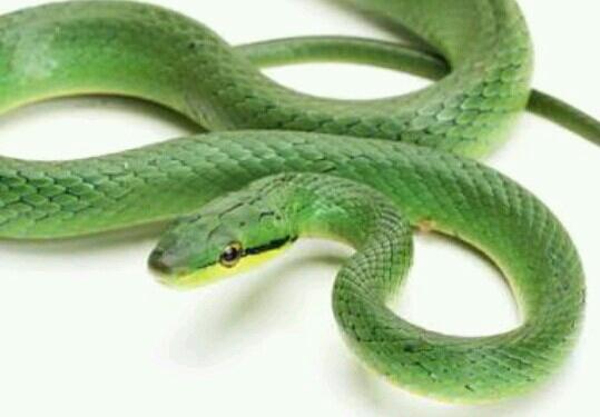 【夢占い】蛇の夢が持つ意味とメッセージとは? - 夢占い ...
