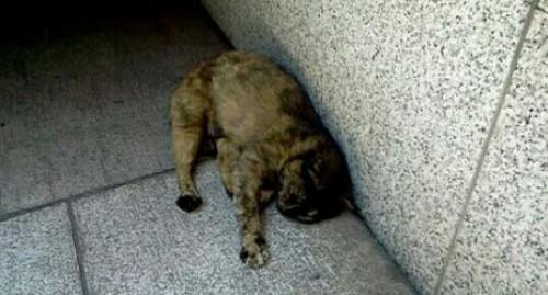 野良猫の夢