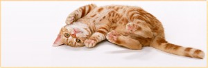 猫の夢占い!猫の夢が表す意外な暗示とは?