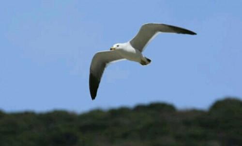 力強く飛ぶ鳥の夢