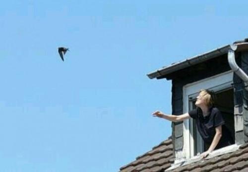 鳥が逃げる夢