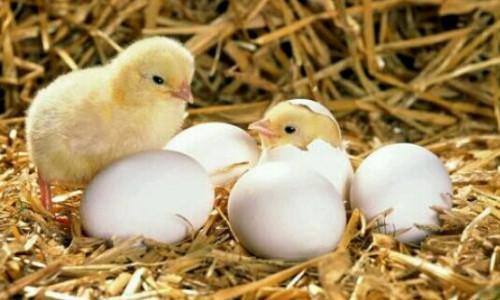 鳥が孵化する夢