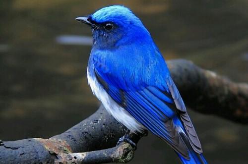 青い鳥の夢