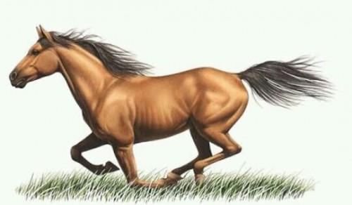 [夢占い]馬の夢が暗示するアナタの内面パワーとは?