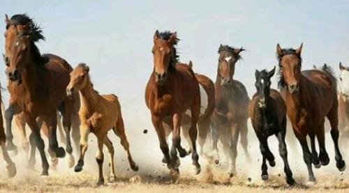 たくさんの馬の夢