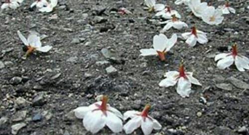 花が散る夢