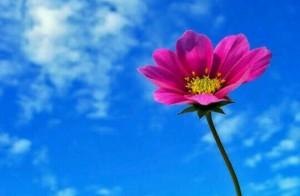 [夢占い]花の夢があらわすアナタの美しさとは?