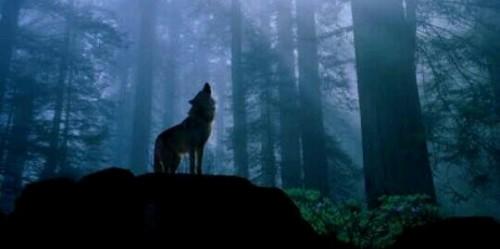 狼の夢占い