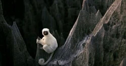 白い猿の夢