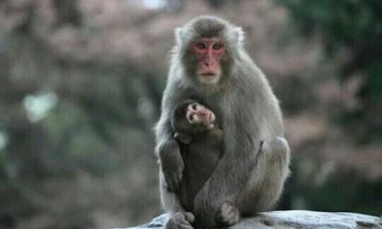 夢占い]猿(さる)の夢が示すの...