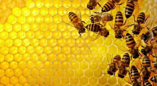 蜂の巣の夢