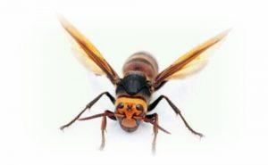 [夢占い]蜂の夢でわかるアナタの集団意識とは?