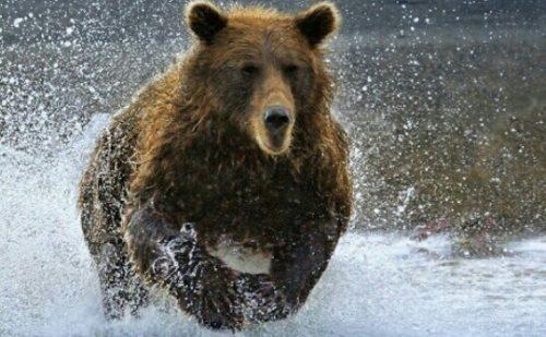 熊に追い掛けられる夢