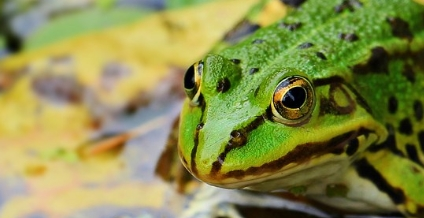 [夢占い]カエル(蛙)の夢が伝える重要な成長とは?