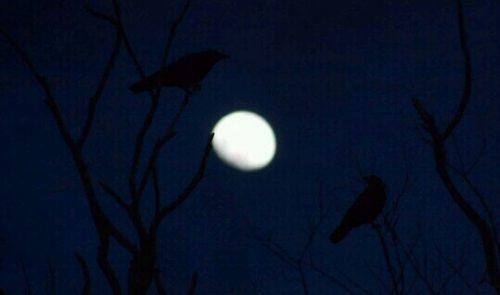 闇夜のカラスの夢
