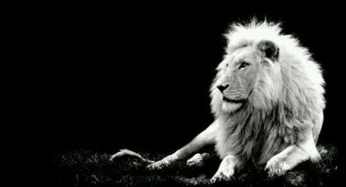 ホワイトライオンの夢