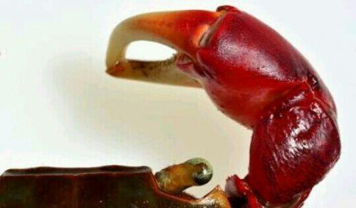 蟹のハサミの夢