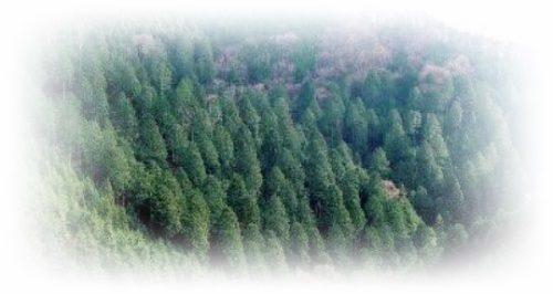 [夢占い]森の夢があらわす無意識の領域とは?