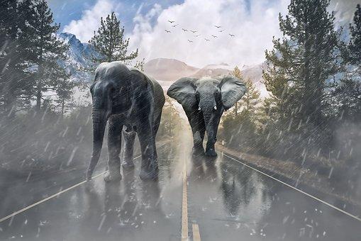 elephant-1736449__340