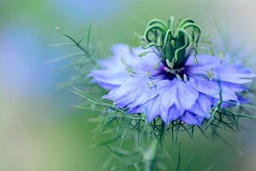 flowers-1184528__340